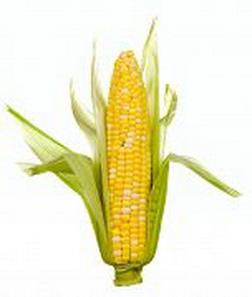 лучший кукурзный кочан в мире