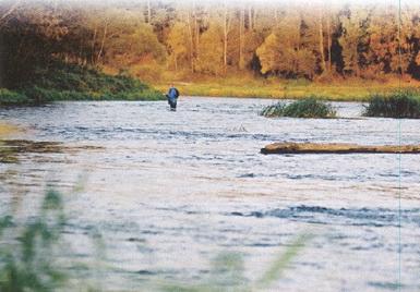 На быстрой реке с блесной