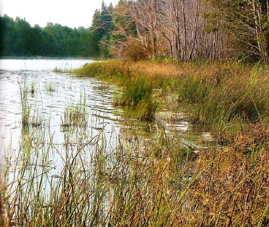 Осенний водоем с холодной водой