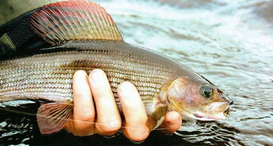 рыбалка нахлыста в иркутске