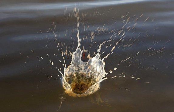 Заброс прикормки в воду