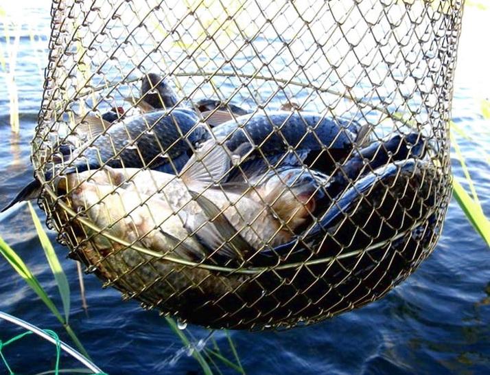 Пойманная рыба при нормальном прикармливании