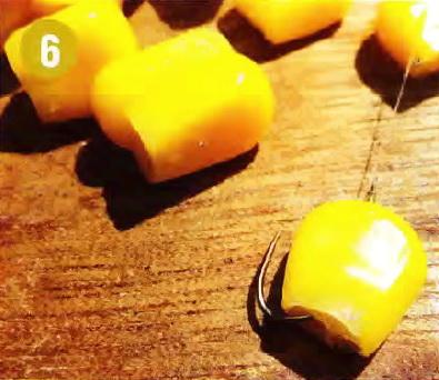 Кукуруза на крючке - для крупных карповых рыб