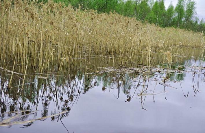 Граница зарослей - отличное место для ловли карася в апреле