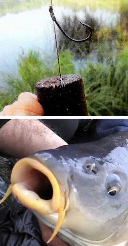 Большие гранулы помогают ловить большую рыбу