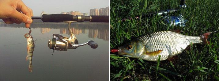 Рыбка пойманная на микроджиг