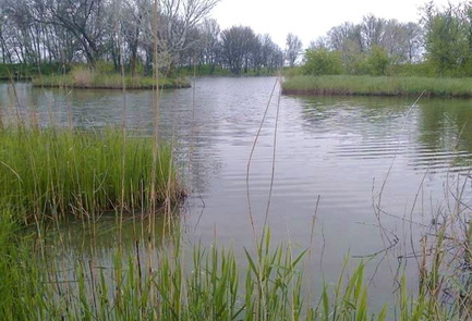 Место для ловли карася весной - мелкие заливы