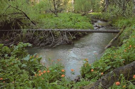 В малой речке много сложных мест