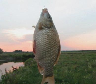Отличный улов при ловле удочкой на тонкую леску