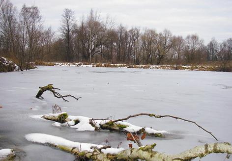 Коряги заметны на поверхности замерзшего водоема