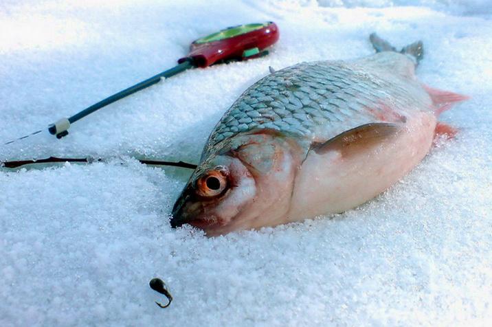 Отличный улов на безмотыльную мормышку зимой