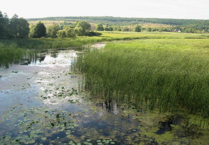 Заросшие водоемы, ловля ведется в сумерки
