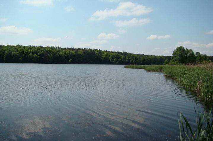 Заросший зарыбленный пруд - место где можно поймать карпа