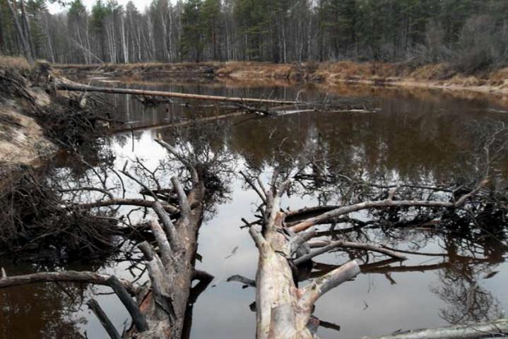 В реке много деревьев, где щука устраивает засады