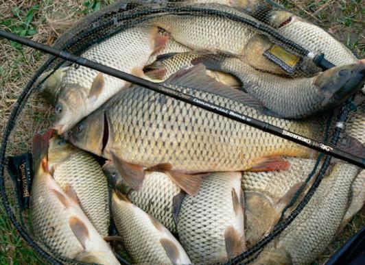 Богатый улов в садке