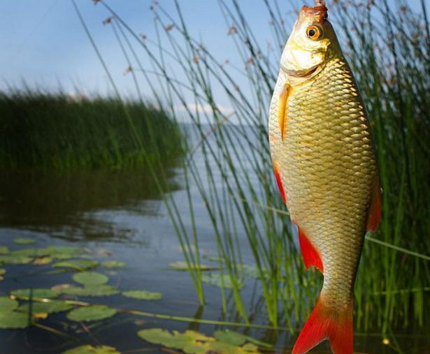 Большая рыба пойманная на удочку