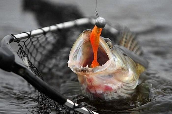 Рыбка попалась на джиг