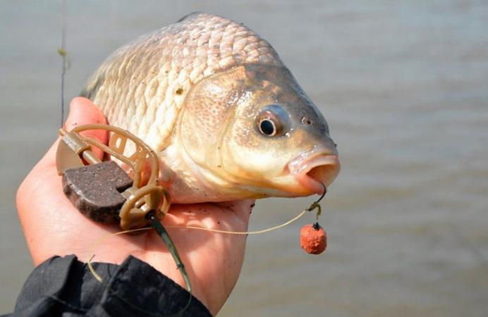 На кого рыбачить весной?