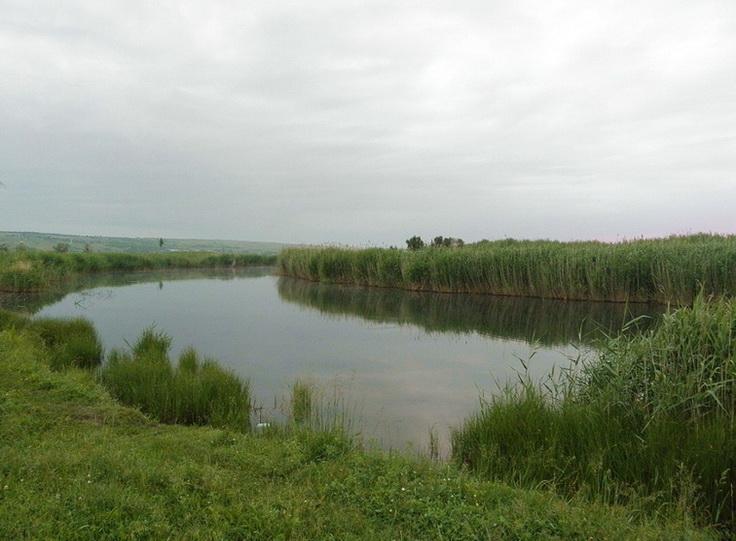 река Молочная