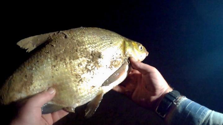 крупный лещ на ночной рыбалки