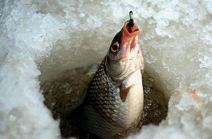 Как ловить безнасадочной снастью зимой