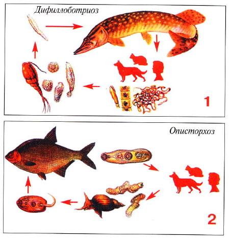 болезни рыбы