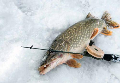 Как ловить щуку - блеснить зимой