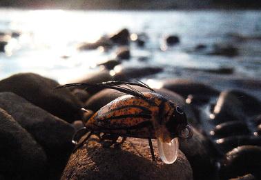 Как ловят на воблеры имитирующие насекомых