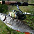 Спиннинг для начинающих рыболовов