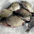 Зимняя рыбалка на карася на видео