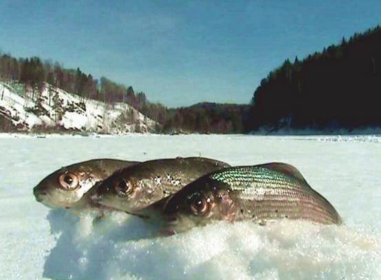 Рыбалка в Сибири зимней порою