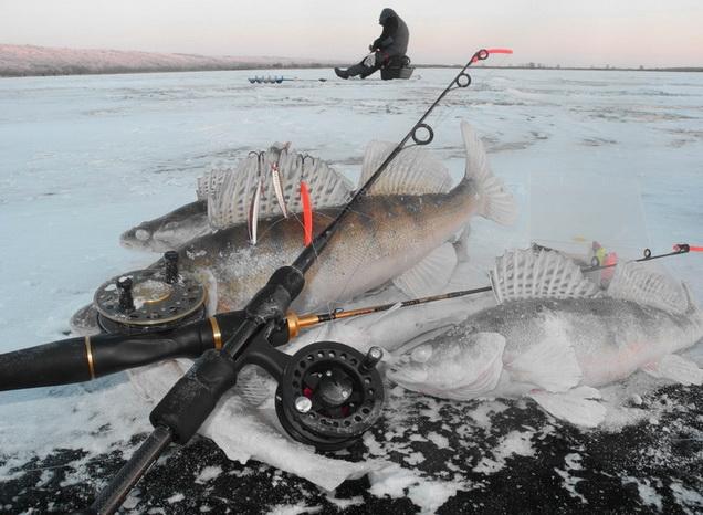 ловля судака зимой на водохранилище
