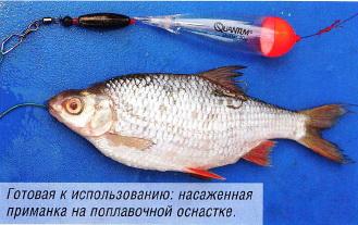 наживка - рыбка для ловли щууки зимой.