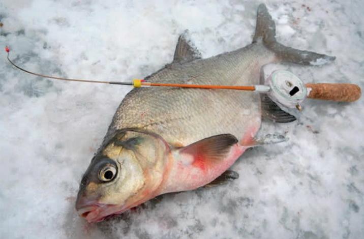 Поймать леща зимой на мормышку