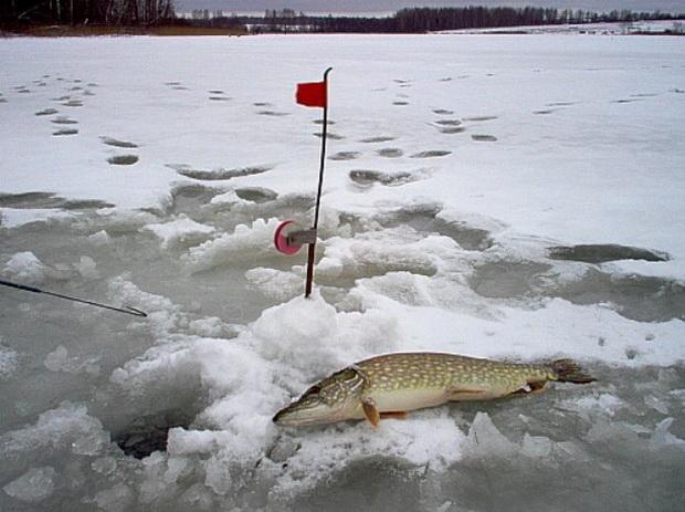 Весенняя ловля щуки на жерлицы из подо льда