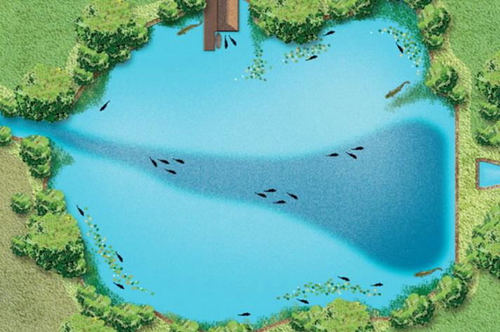 рыбные места водоема