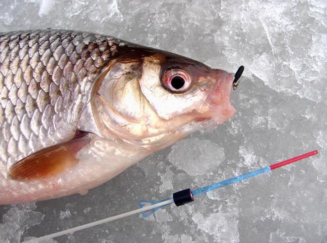 Поймать на чертика рыбу не сложно