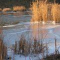 Плотва зимой на водоемах без течения