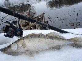 Как ловить судака зимой на спиннинг