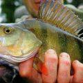 Учимся понимать рыбу