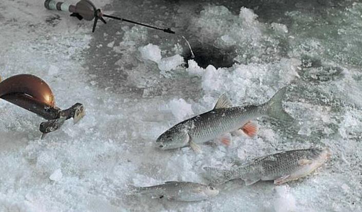 Поймать рыбу на зимней рыбалке