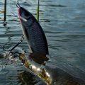 Ловля спиннингом, Диалоги о рыбалке
