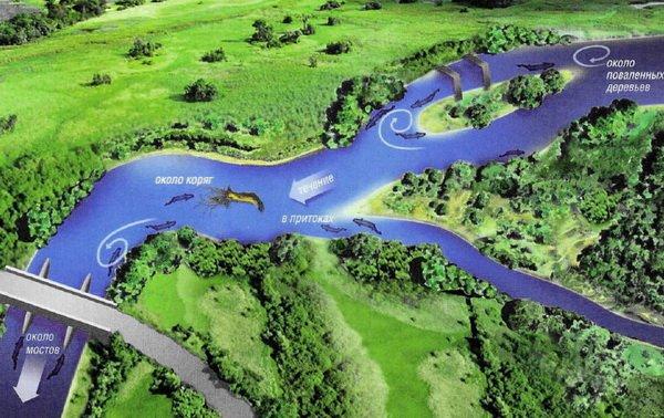места, где находится щука в реке