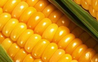 Настойка кукурузы для замешивания прикормки