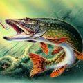 Видеоролики о рыбалке