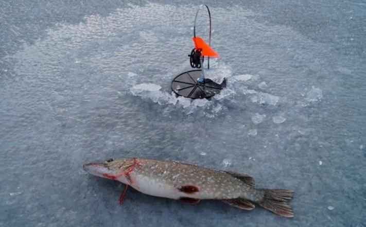 Большая рыбалка с жерлицами