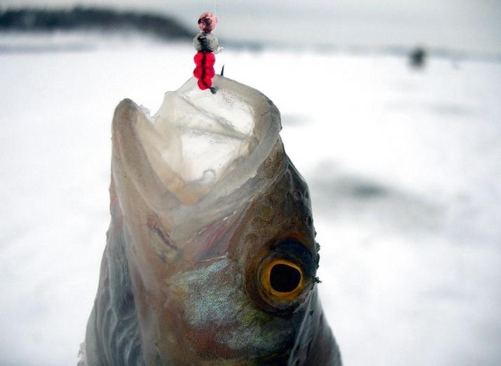 Поимка рыбы на перекате