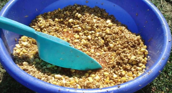 зерновая прикормка на карпа