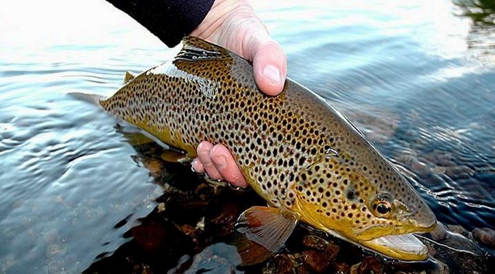 Ловим лосося ленобласть