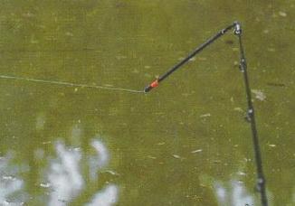 Как ловить фидером со свингтипом